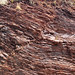 Fault in ribbon cherts (Franciscan Complex, Lower Jurassic-Lower Cretaceous; southern Marin Peninsula, San Francisco Bay, California, USA) 3