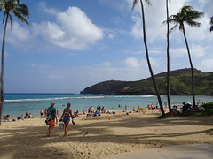 Hanauma Bay is one of the world's most important humpback whales habitat (Trinimusic2008 -blessings) Tags: trinimusic2008 judymeikle nature coconuttrees palmtrees sky clouds march 2019 blueskies hanaumabay