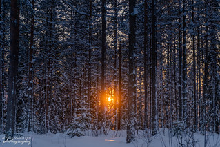 Winter-sunset in the woods in Maridalen valley north of Oslo