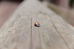 Bug (Lauren Clarke Photography) Tags: fujifilmxf10 28mm classicchrome