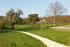 1901 PAR UN CHEMIN DETOURNE (rustinejean) Tags: rustine chemin nature arbres parc