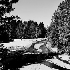 Garder son rythme... (woltarise) Tags: iphone7 soleil ombres froid jogging course jardin botanique montréal