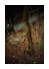 2019/3/3 - 13/15 photo by shin ikegami. - SONY ILCE‑7M2 / Voigtlander NOKTON CLASSIC 40mm f1.4 SC VM (shin ikegami) Tags: asia sony ilce7m2 sonyilce7m2 s7ii 40mm voigtlander nokton nokton40mmf14sc tokyo photo photographer 単焦点 iso800 ndfilter light shadow 自然 nature 玉ボケ bokeh depthoffield naturephotography art photography japan earth