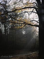 Planken Wambuis (Arnold van Wijk) Tags: bos forest autumn herfst landscape landscahp natuur nature mamiya645pro kodakportra160 epsonv600 silverfast anrscanglass