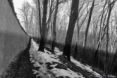 Sunset in the woods (tomaso.belloni) Tags: blackandwhite field landscape nobody photography italy shadow sunset wall tree sangenesio brianza