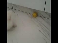 Dog Vs Lemon - Cute Dog (tipiboogor1984) Tags: aww cute cat funny dog youtube
