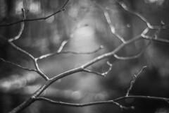 Par quel chemin (Un instant.) Tags: branches forest trees bnw noiretblanc blackandwhite bokeh love pentacon poésie blues dark sombre river nostalgie ailleurs