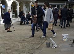 Busker Bucket, Winchester UK (neilalderney123) Tags: winchester sketeton busker bones dog samsung phone s9