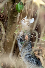 Intrigued look (Trent takes photos) Tags: cat kitten nature intrigued look curious stare