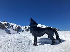 Wolf Sculpture In Courchevel (Marc Sayce) Tags: deer sculpture courchevel spring march 2019 mountains snow snowboarding skiing ski resort three valleys trois vallées savoy savoie