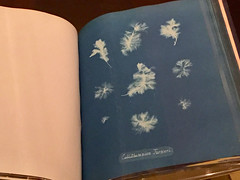 1-7 Anna Atkins Blue Prints at NYPL (MsSusanB) Tags: annaatkins british blueprint horniman nypl newyork nyc newyorkpubliclibrary exhibition anna atkins photographs victorial women art algae cyanotype pioneer