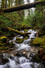 Forested Flow (Joshua Johnston Photography) Tags: oregon pacificnorthwest pnw forest joshuajohnston sonya7iii sonyfe28mmf2 nature water trees moss green