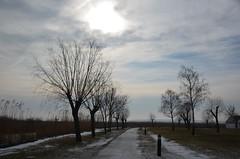 Sula Mörbischis (anuwintschalek) Tags: nikond7000 d7k 18140vr austria burgenland mörbisch mörbischamsee neusiedlersee thaw tauwetter see lake järv jää ice eis talv winter january 2019 seebadmörbisch