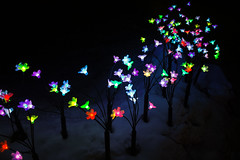 Japanese Forest Light Flowers (jasohill) Tags: night color winter tohoku city beauty oka iwate light prefecture photography illumination festival flowers art 2019 japan ishigami