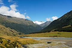 20190207-13-Cows in West Matukituki Valley (Roger T Wong) Tags: 2019 nz newzealand rogertwong sel24105g sony24105 sonya7iii sonyalpha7iii sonyfe24105mmf4goss sonyilce7m3 southisland westmatukitukivalley bushwalk hike landscape outdoors tramp trek walk