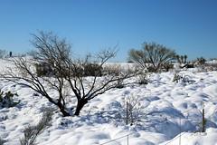 tonto-national-forest-1902230337 (nagerfran) Tags: cactus winter desert storm snow cold freeze arizona scottsdale tontonationalforest