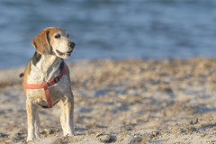 Tipi da spiaggia (Francesca Murroni ┃Wildlife Photographer) Tags: dogs animals fauna animalslovers beach sea winter sulcis sardinia cani animali spiaggia mare
