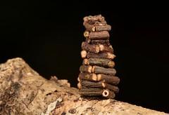 """Log Cabin"" Bagworm Moth Caterpillar (Psychidae) (John Horstman (itchydogimages, SINOBUG)) Tags: insect macro china yunnan itchydogimages sinobug entomology canon moth lepidoptera caterpillar larva log cabin psychidae black bagworm"