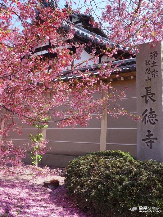 【京都旅遊】長德寺│京都最早櫻花│熱門賞櫻景點 @魚樂分享誌