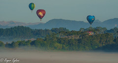 Balloons over waikato 2019 (rogsykes) Tags: hot air balloon newzealand hamilton sonya77ii
