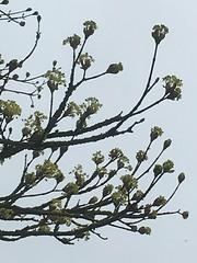 Life goes on (Katy Wrathall) Tags: 36592 2019pad eastyorkshire eastrt england garden 2019 april spring