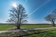 Fuß- und Radweg zwischen Dechsendorf und Heßdorf 2934 (Peter Goll thx for +11.000.000 views) Tags: baum dechsendorf erlangen gegenlicht natur backlight nature sonne tree hesdorf bayern deutschland de