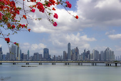 Panama City (Rack Lett) Tags: bougainvilleas panama city sea coast america latina central eos 550d canon horizon landscape town sky photography modern skyscraper building cityscape ocean pacific architecture