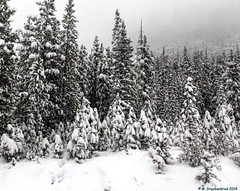 Scene along the Icefields Parkway during a Snowstorm No.2 (PhotosToArtByMike) Tags: icefieldsparkway snow snowing snowstorm banffnationalpark saskatchewanrivercrossing canadianrockies banff albertacanada mountain mountains alberta