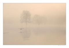 La Loire a prise ses quartiers d'hiver (Bruno-photos2013) Tags: loire maineetloire boire drain brume foggy brouillard bretagne anjou reflets reflection oiseau bird paysage paysageligérien paysdeloire