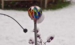Winter # 1 (schreibtnix on 'n off) Tags: deutschland germany bergischgladbach jahreszeiten seasons winter schnee snow bunt coloured nahaufnahme closeup strukturen structures olympuse5 schreibtnix