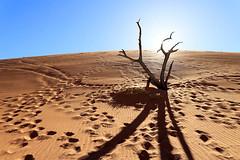 Deadvlei - Sossusvlei - Namib desert – Namibia (lotusblancphotography) Tags: africa afrique namibia namibie nature deadvlei sossusvlei namibdesert desert désert sand tree sable arbre landscape paysage