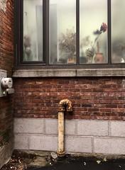 J'ai grand besoin de poésie, l'hiver... (woltarise) Tags: secrets maison outremont montréal fenêtre fleurs bouquets poésie surprise beauté quotidien mur briques hipstamatic iphone6s couleurs