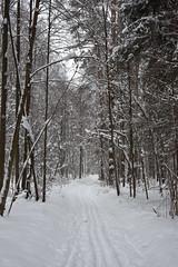 Лес / Wood (MatveyKarmakov) Tags: nikon nikond810 d810 digital digitalphotography nature natureshot naturallight landscape landscapes forest wood winter ski snow 50mmlens 50mm nikkorsauto1450mm nikkor fx fullframe