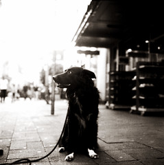 Linus RIP (Claudio Taras) Tags: rolleiflex35f ilfosol fomapan film filmisnotdead foma bw bokeh biancoenero bokehlicious monocromo monochrom mediumformat medioformato street streetshot streetdog rollfilm 6x6 linus littledoglaughednoiret