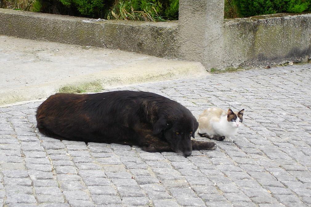Cão e gato, S. João de Tarouca — © 2006