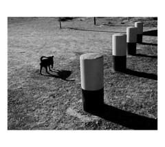 ... (J. Garcia2011) Tags: callejera urbano urbana calle streetphotography blancoynegro byn bn blackandwhite bw panasonicgx80 valencia comunidadvalenciana