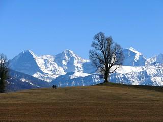 Eiger, Mnch, Jungfrau am 16.02.2019