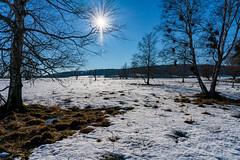 Schopflocher Torfmoor (skp-mm) Tags: 24mm baum himmel landschaft nature schwäbischealb tree winter sky torfmoor schopfloch moor