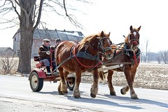 A Morning Ride At Last (Daryll90ca) Tags: horsebuggy horse horses clydesdale country rural road