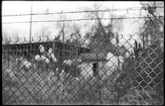 abandoned industrial area, barbed wire, chain link fence, Ashevile, North Carolina, Exa Ihagee Dresden, Meritar 50mm f-2.9, Rollei RXP 400, 12.26,18 (steve aimone) Tags: industrial commercial abandoned barbedwire chainlinkfence architecture southasheville asheville northcarolina exa exaihageedresden meritar50mmf29 rolleirxp400 ilfordilfosol3developer primelens 35mm 35mmfilm film monochrome monochromatic blackandwhite landscape urbanlandscape urbandecay