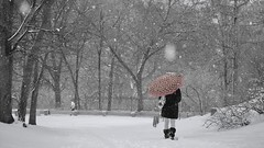 Central  Park with snow - Take with Panasonic gx7 and Panasonic 45-150 (Boutillier Geoffrey) Tags: 45150 photographie arts photographe white black blanc noir bw nb leica panasonic garden jardin hiver froid cold america usa ny centrale centralepark neige snow