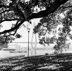 Sydney (Bill Thoo) Tags: sydney nsw newsouthwales australia sydneyharbour city urban tree silhouette mono monochrome bnw bw blackandwhite blackandwhitefilm blackandwhitefilmphotography film filmphotography filmcamera analog analogphotography analoguephotogrpahy analogue mediumformat mediumformatfilm mediumformatfilmcamera mediumformatfilmphotography travel landscape 6x6 8028 500cm fomapan fomapan400