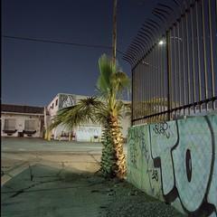 One palm (ADMurr) Tags: la night palm wall warehouse hasselblad zeiss dad229 kodak ektar mf 6x6 500cm 50mm distagon