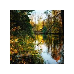 Eutiner See II (Passie13(Ines van Megen-Thijssen)) Tags: deutschland holsteinerschweiz eutin eutinersee germany nature fujifilm x100f inesvanmegen inesvanmegenthijssen autumn herfst herbst