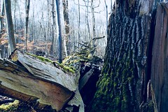 Forest (leon1.7) Tags: photo tree baum forest wald germany deutschland natur nature
