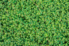 Directly above (Rushay) Tags: abstract pattern green backgrounds directlyabove plant portelizabeth southafrica