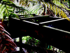 The Sluice (Steve Taylor (Photography)) Tags: sluice bracing architecture black green brown contrast wooden newzealand nz southisland canterbury christchurch fern leaves silhouette willowbankwildlifereserve