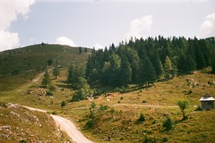(szmenazsófi) Tags: smenasymbol analog film smena symbol lomo analogue 35mm alps alpine chairlift slovenia mountain outdoor outdoors nature green steineralpen kamniksavinjaalps
