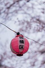 2019_03_30_IMCJP_Sakura_Instameet_028_HD (Nigal Raymond) Tags: imcjpsakura imcjp igersjp instameet お花見 桜 石神井川 板橋 東京 日本 sakura hanami cherryblossom shakujigawa itabashi tokyo japan sonyalpha alphacollective bealpha sonyphotography sonya7r3 a7r3 sonyimages sonyportraits nigalraymond ナイジャルレイモンド wwwnigalraymondcom