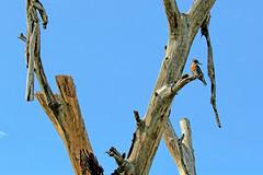 KENYA 2019 (Ian Macfadyen) Tags: africa greatriftvalley nairobinationalpark lakenaivasha olodienlake lakenakuru menengai kws zebra waterbuck vulture lappetfacedvulture vulturerescuesanctuary whitebackedvulture birdofprey raptor fish eagle africanfisheagle whitebackedpelican pelican waterbird commoncormorant cormorant giraffe rhino blackrhino whiterhino craterlake greencraterlake cresecentisland fishermanscamp deadtrees hippo hippopotomus alanroot joanroot kingfisher piedkingfisher greatkingfisher longonot mountlongonot stork maraboustork yellowbilledstork buffalo warthog africanbird fevertrees birdinflight